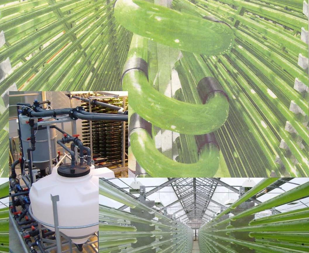 Выращивания водорослей 75